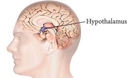 Hypothalamus appetite suppressants
