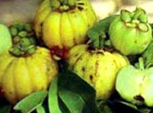What does garcinia cambogia look like